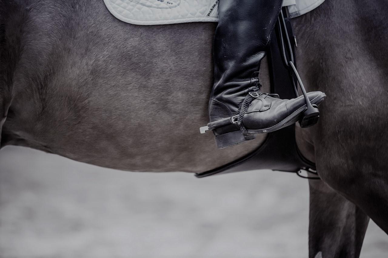 De voordelen (en één nadeel) van een geschoren paard